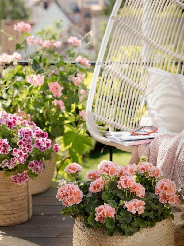 Έφτασε η εποχή του γερανιού με όμορφα χρώματα, πλούσια άνθη και εύκολη φροντίδα. Δημιουργήστε έναν ανθισμένο παράδεισο με γεράνια για κάθε γούστο και στυλ.