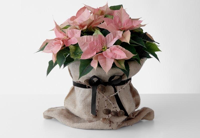 Χαρίστε DIY δώρα με Αλεξανδρινό γεμάτα αγάπη και φροντίδα που θα εντυπωσιάσουν τα αγαπημένα σας πρόσωπα και θα χαρίσουν χαμόγελα.