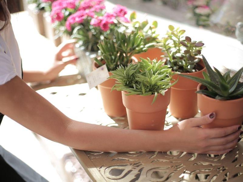Ο απίστευτος λόγος που πρέπει να βάζετε καφέ στις γλάστρες. Όλα όσα πρέπει να γνωρίζετε για τα ωφέλη του καφέ στα φυτά σας.